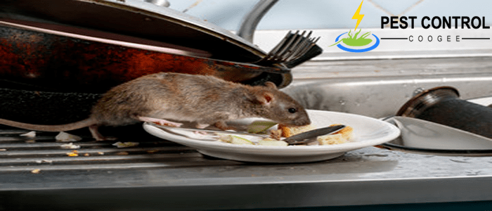 Affordable Rodent Control Services